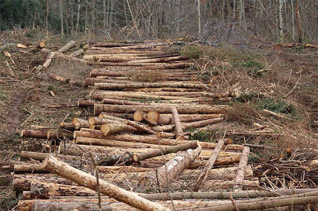 Когда-то это были особо охраняемые «медоносные участки» приморского леса. Но из-за нечистых на руку дельцов они стали мусором.