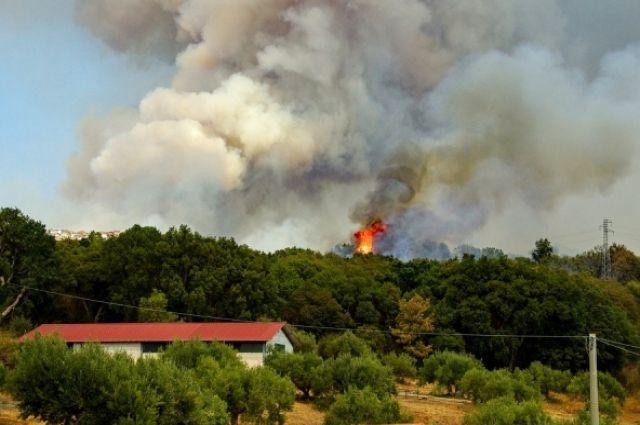 Большинство пожаров в лесах Тюменской области происходит по вине человека