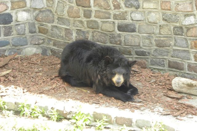 В Калининградском зоопарке погибли три балтийских тюленя и медведь-барибал