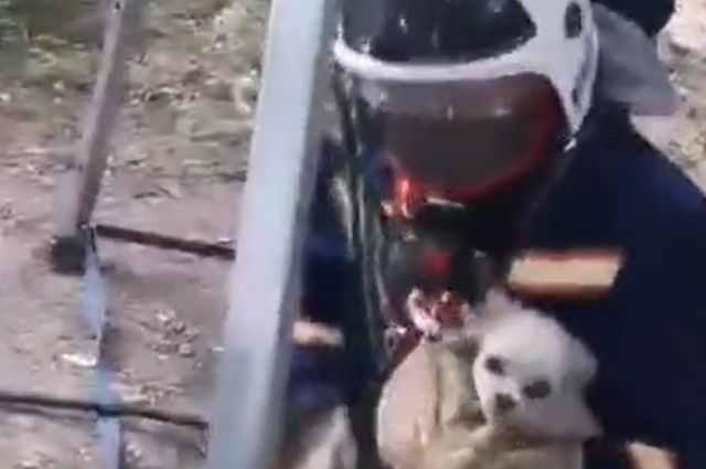 Спасатели вытащили упавшую в колодец собаку в Новосибирске