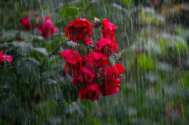 24 июля в Петербурге ожидаются дожди