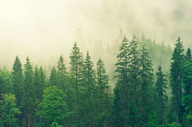 Тюменцам запретили посещать леса