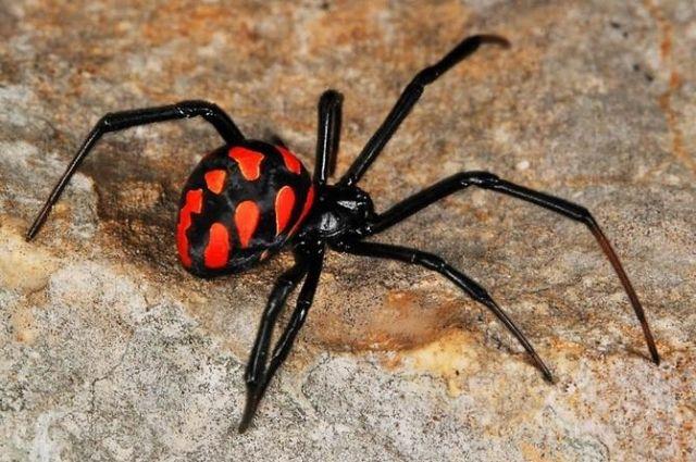 В Запорожской области женщина после укуса паука попал в больницу