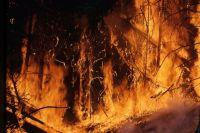 В Тоцком военном лесничестве за сутки сгорело 5 гектаров леса.