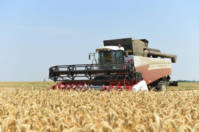 В Оренбуржье уборка урожая не началась в 4 районах.