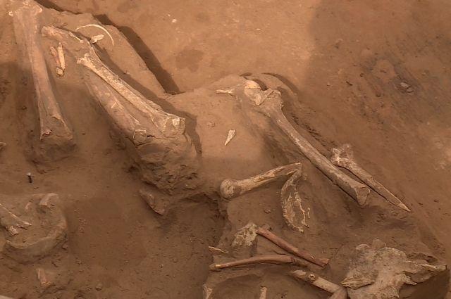 Найденные в Ташлинском районе останки принадлежат человеку, жившему шесть тысяч лет назад.