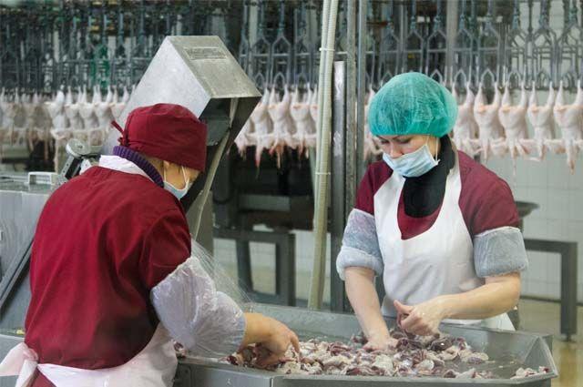 Сегодня птицефабрика – самый успешный агрокомплекс региона.
