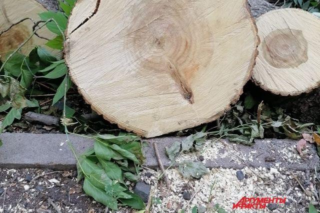 Прокуратура: в Оренбурге вырубают деревья с нарушениями.