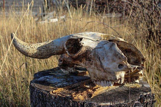 В пяти населенных пунктах Оренбуржья зафиксирована вспышка бруцеллеза.