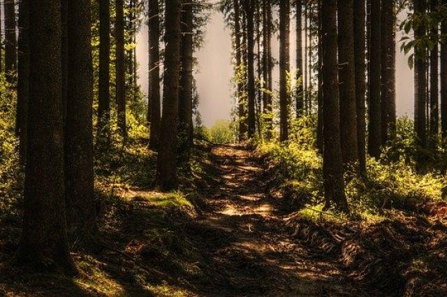 В лесах Ямала до 19 августа продлили ограничение пребывания людей