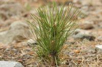 Восстановление лесов осуществляется в рамках федерального проекта «Сохранение лесов».