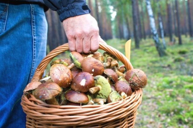 Тревожная статистика: в Украине с начала года 36 человек отравились грибами
