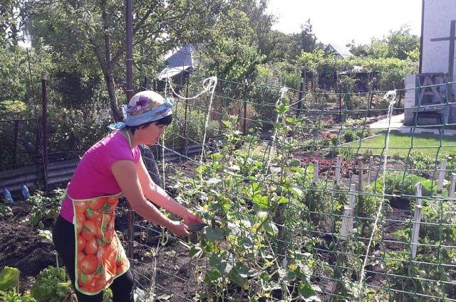 Жители Сорочинска жалуются, что не могут полить огороды.