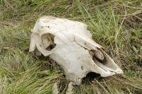 На зловонный запах и пожары на территории скотомогильника обратились местные жители