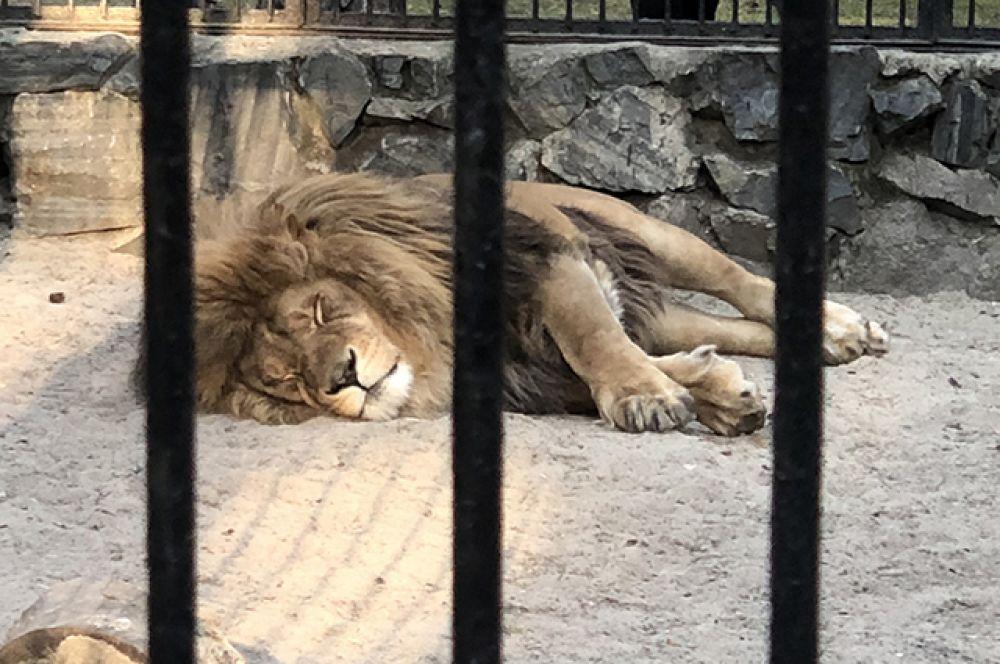 Зоопарк также проводит Дни животных. 19 июля, например, стало Днём льва. В начале 2020 года, кстати, в зоопарке была сформирована пара - Сэм и Нейтири.