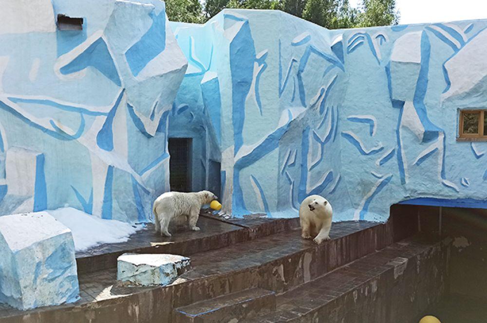 Одним из любимых мест посетителей зоопарка остаётся вольер с белыми медведями. Посмотреть на больших, но таких красивых хищников рады и дети, и взрослые.