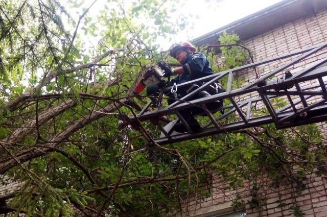 К верхней части дерева спасателей подняли на пожарном автомобиле ПЧ №4 с механизированной лестницей.