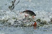 В Закарпатской области рыба утянула за собой в воду рыбака: мужчина утонул