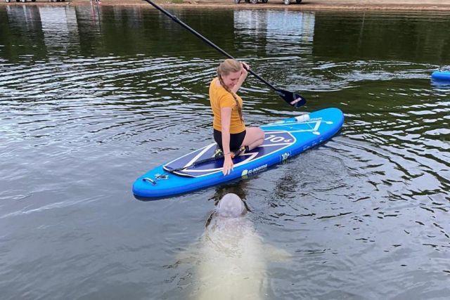 Дельфины, похоже, из «китовой тюрьмы» охотно приближаются к людям.