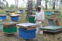 Гибель пчёл зафиксировали на 40 пасеках в восьми районах республики.