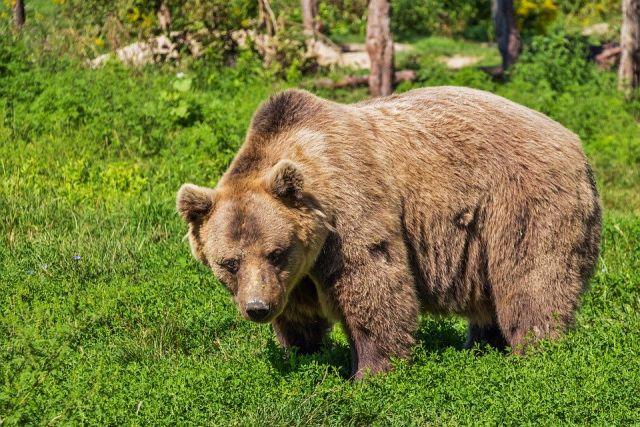 Медведей содержали в вольере в черте поселка Дагомыс.