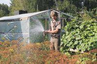 Необходимо подкормить растения калийными удобрениями.