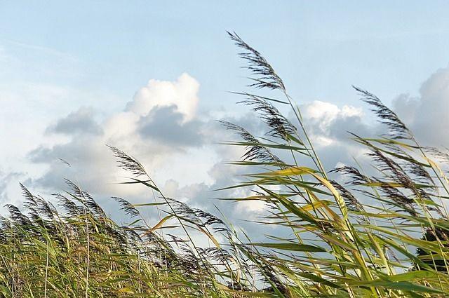При грозе порывы ветра могут достигнуть 20 метров в секунду.