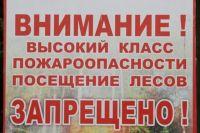 Тюменцам напоминают: за нахождение в лесу ждет штраф