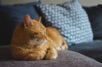 Тюменцам рассказали о самых дорогих породах кошек