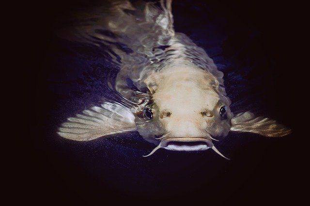В Тюменской области активно развивается рыбное хозяйство