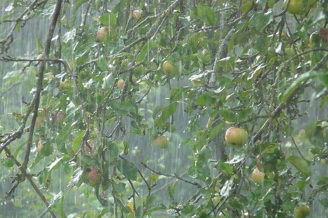 Рабочая неделя в Оренбуржье начнется с ливней и сильного ветра.