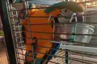 Чусовляне четыре месяца помогают животным из передвижного зоопарка