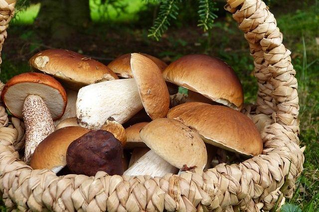 Сезон белых грибов в самом разгаре!