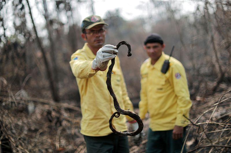 Член пожарной бригады Бразильского института окружающей среды и возобновляемых природных ресурсов (IBAMA) держит в руках сгоревшую змею.