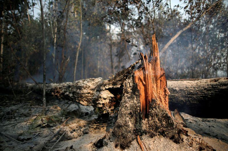Сгоревшие деревья неподалеку от Апуи.
