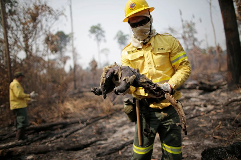 Мертвый муравьед на руках у пожарного.