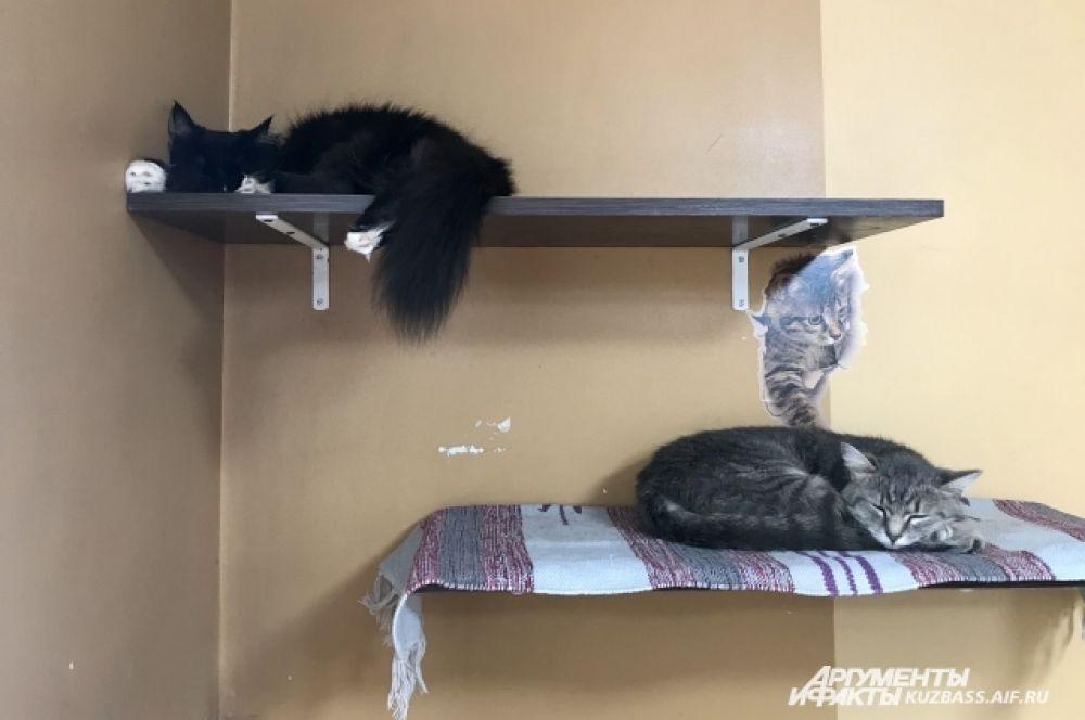 Каждого из котиков можно присмотреть и забрать домой - с 12 до 22 часов.