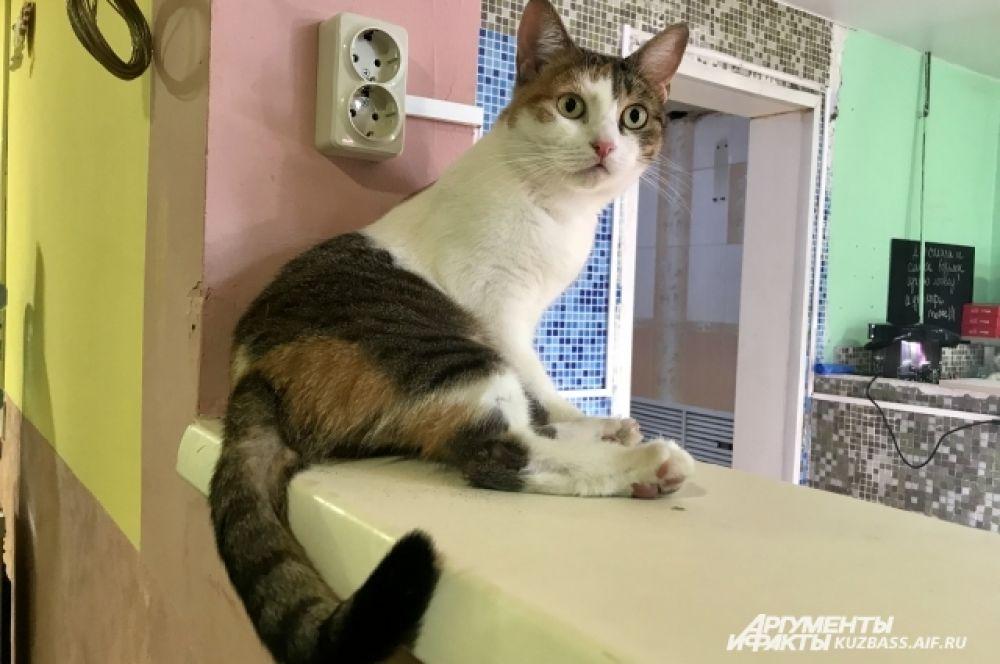 У каждого кота тут нелёгкое прошлое, но в «Плюшке» о них заботятся - все котики стерилизованы, кастрированы, привиты и вовремя бывают у ветеринара.