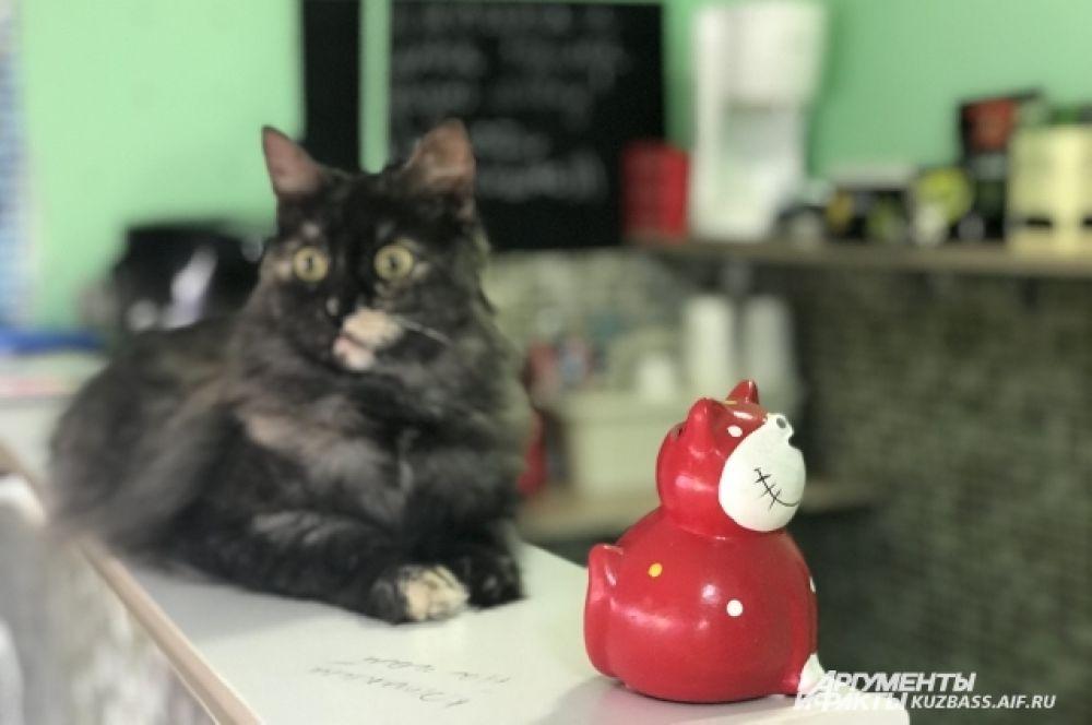 Животных можно угощать кошачьими вкусняшками, гладить и брать на ручки, если они не против, приносить корма и другие полезности для приюта