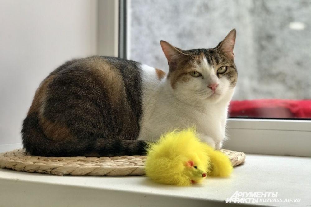 Пока кошачья деревушка только развивается и ждёт своих людей, которые помогут обустроить территорию.