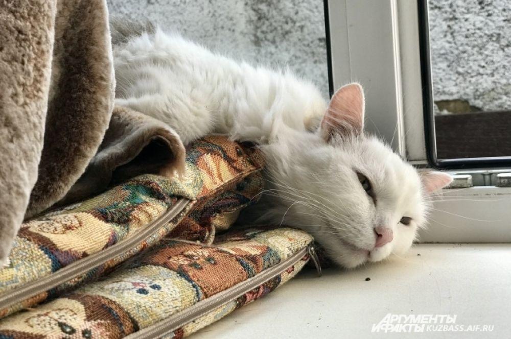 Например, кот Ефим год назад застрял в подвальной дырке, из которой его вытащили только через сутки.