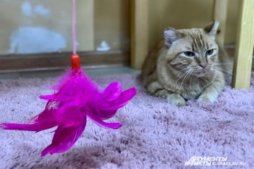 Все животные из котокафе, которое руководители окрестили кошачьей деревушкой «Плюшка», - из приюта, то есть бездомные.