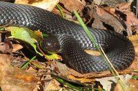 Тюменцам рассказали, что делать, если укусила змея