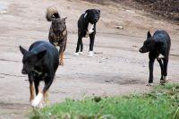 В разных районах города собаки нападают на людей.
