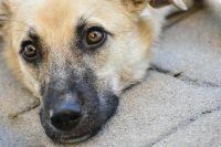На страничке приюта можно посмотреть видео прогулок с питомцами, среди которых есть и породистые собаки – спаниель и даже собака с чертами экстерьера, присущими  породе акита-ину.