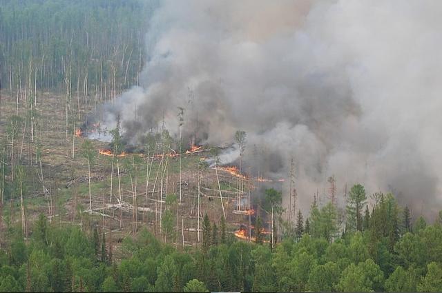 На территории края действует 43 лесных пожара на общей площади 15,3 тыс. га.