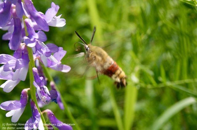 Спутать бабочку с колибри, действительно, очень легко.