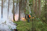 По данным лесопожарного центра, огнём охвачены 15303 гектаров леса.