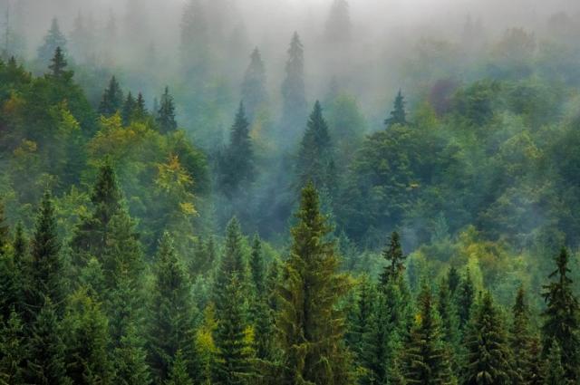 Все лесные пожары на Ямале потушены