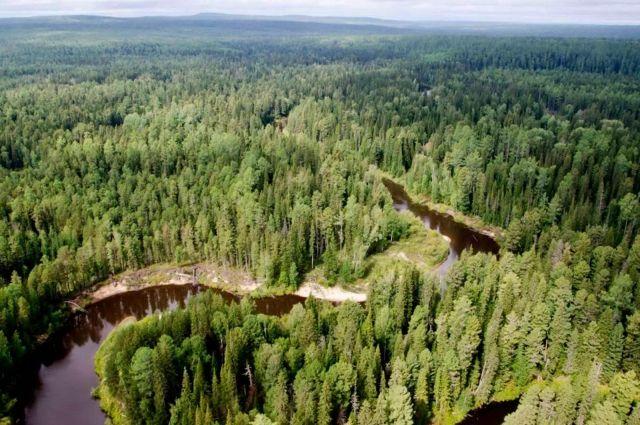 Леса обрели статус защитных и теперь не будут вырубаться.